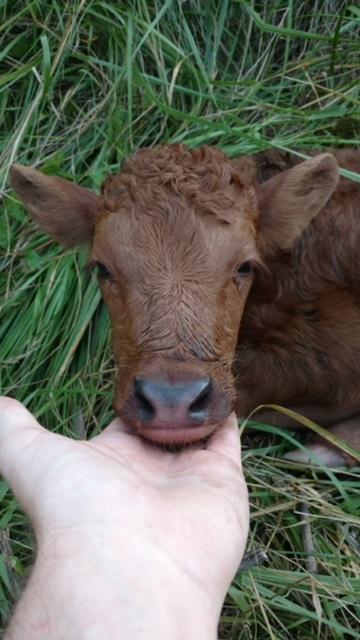 Meet Tiny!