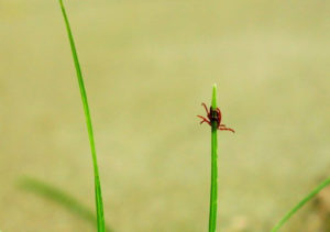 """Lyme Disease – What The """"Experts"""" May Not Tell You!"""