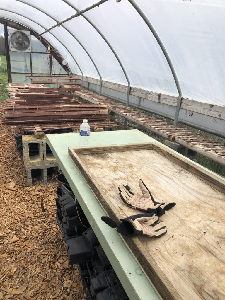 Greenhouse Disaster! The Good, The Bad & The Ugly!