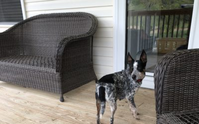 Meet Katie the Farm Dog!