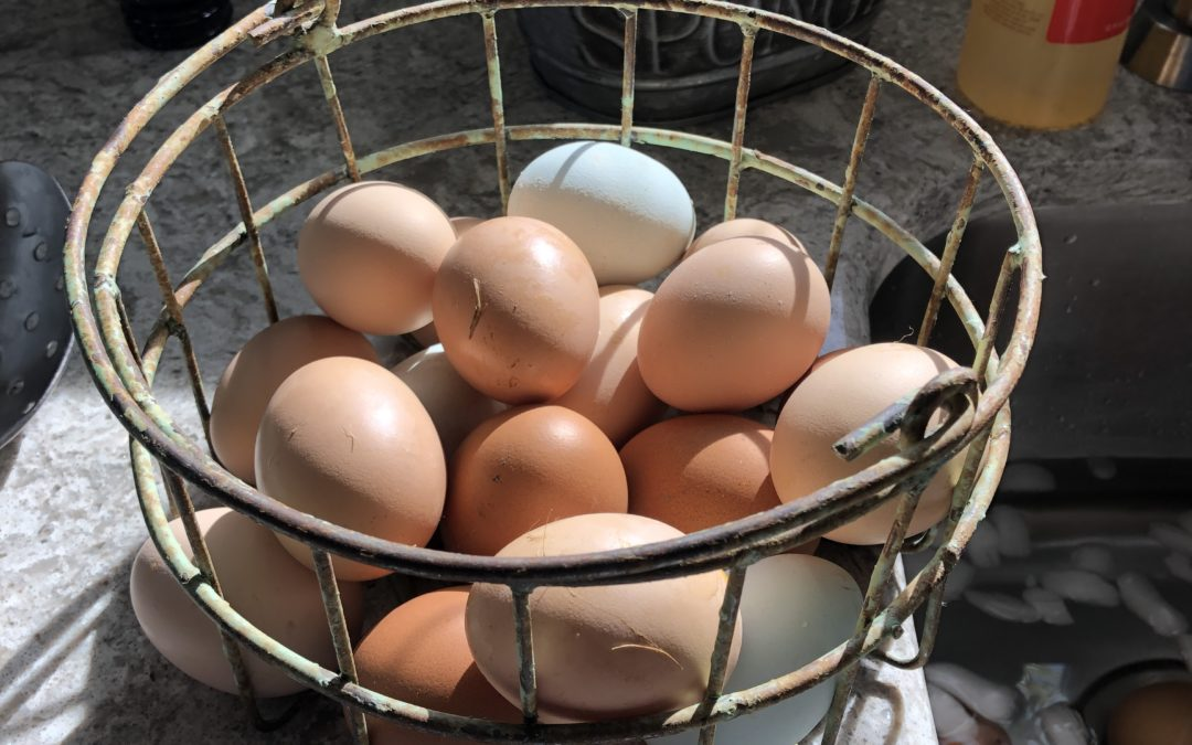 Good Hens, Naughty Hens & How to Preserve Their Eggs