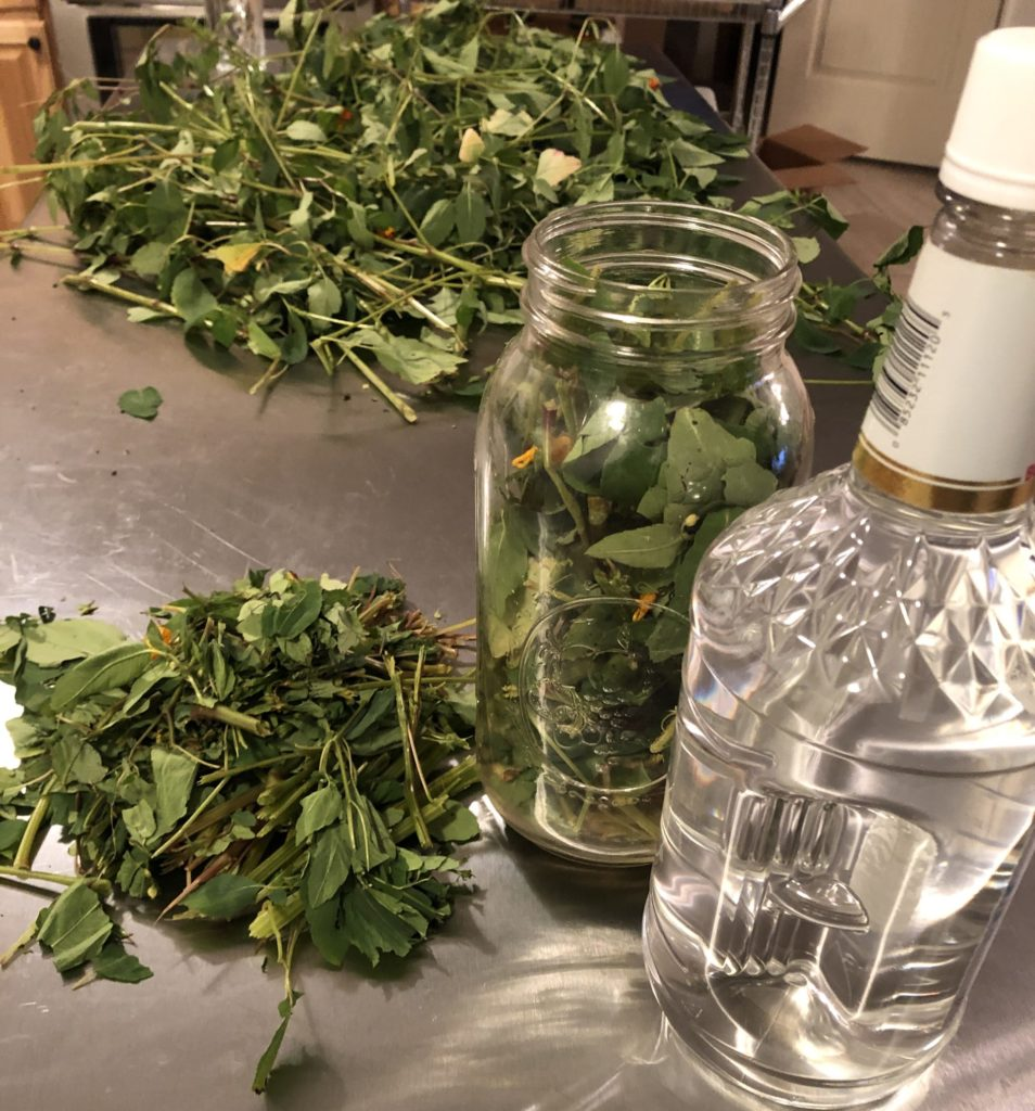 How to Make a Jewelweed Tincture!
