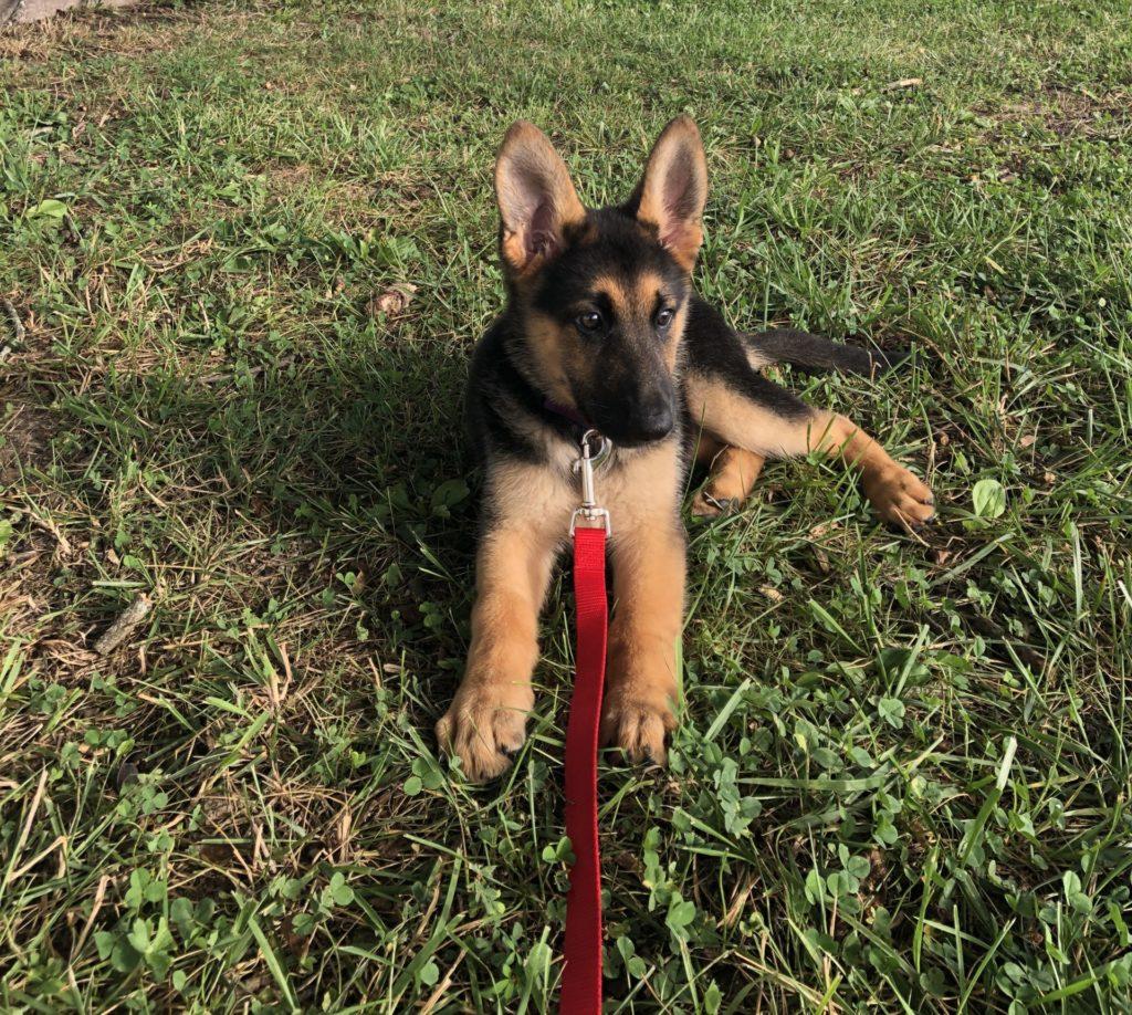 Keko – My warrior!