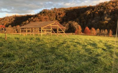Barn Going Up!